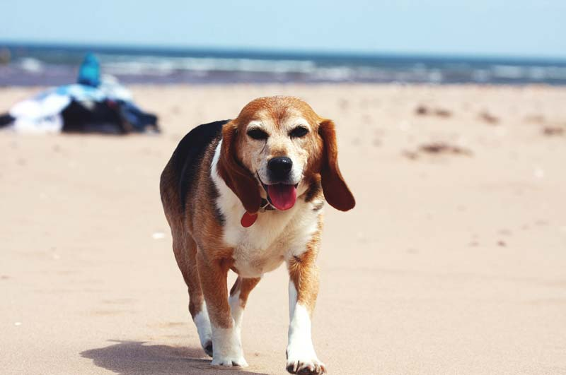 Dog Friendly B&B Inn Cape Cod for Fun Vacation Activities with Fido